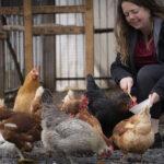 Specifik aide et ses poules